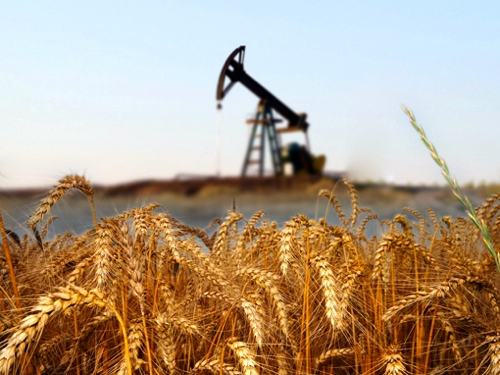 Oil or Wheat…